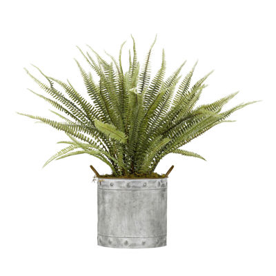 Boston Fern in Metal Planter
