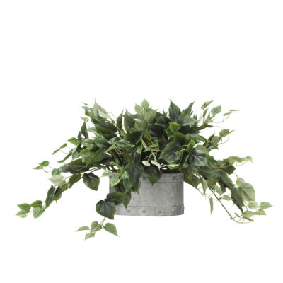 Philo Ivy in Metal Planter