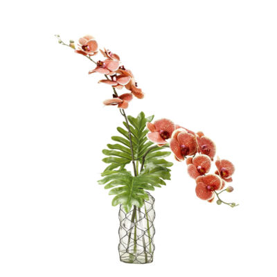 Red Cream Phael Orchids in Glass Vase