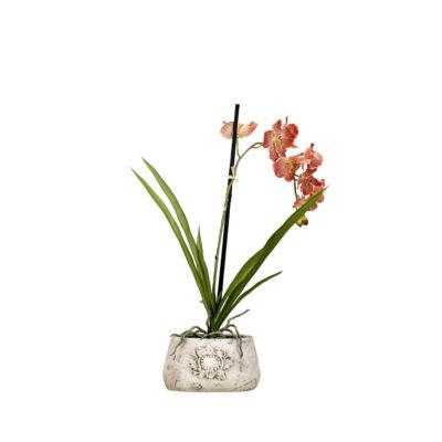 Red Cream Vanda Orchid in Ceramic Planter
