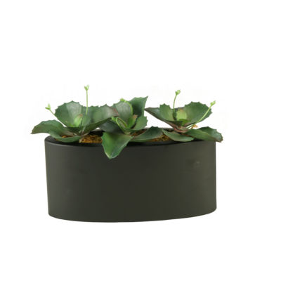 Wild Succulents in Metal Planter