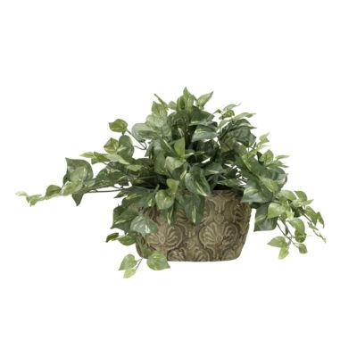 Pothos Ivy in Ceramic Planter
