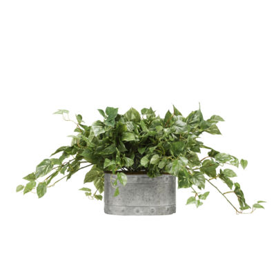 Pothos Ivy in Metal Planter