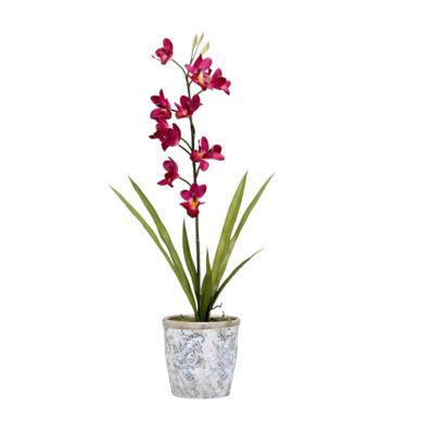 Purple Cymbidium Orchids in Ceramic Planter