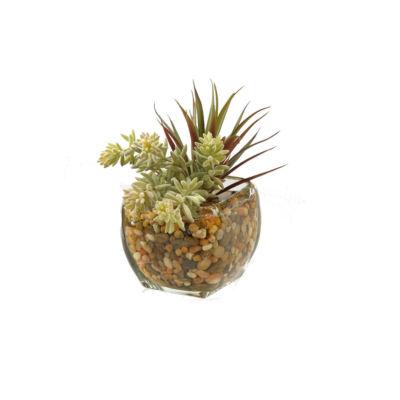 Yucca Succulent in Glass Cube