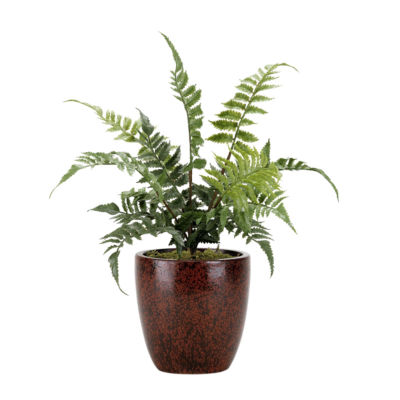 Small Leather Fern in Ceramic Planter