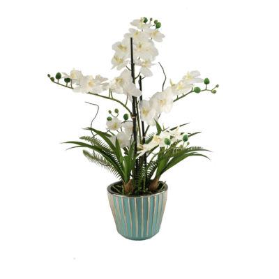 Cream Orchids in Teal Ceramic Planter