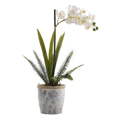 Cream Vanda Orchid in Ceramic Planter
