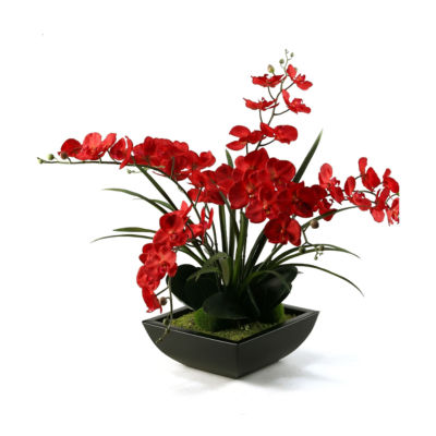 Deep Red Phael Orchids in Metal Planter