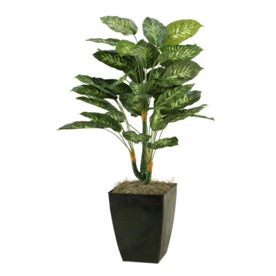 Dieffenbachia Plant in Metal Planter