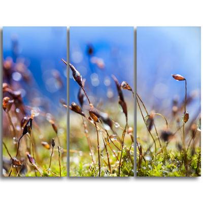 Designart Abstract Summer Spring Moss Flowers Modern Landscape Wall Art Triptych Canvas