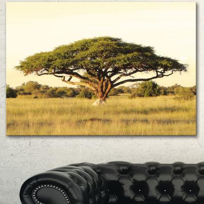 Designart Acacia Tree On African Plain Oversized African Landscape Canvas Art - 3 Panels