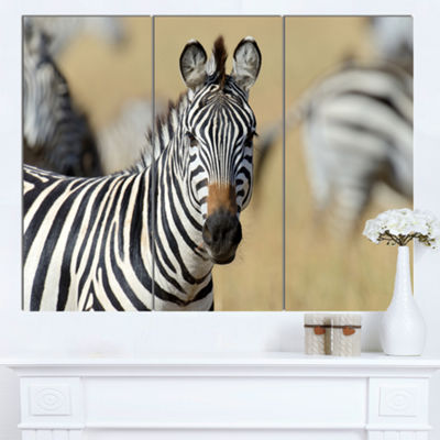 Designart African Zebra Close Up View African Canvas Art Print - 3 Panels