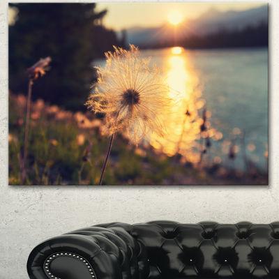 Designart Arctic Cotton Flowers At Sunset Floral Canvas Art Print