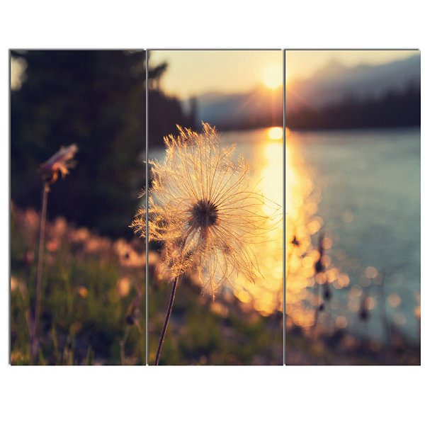 Designart Arctic Cotton Flowers At Sunset Floral Canvas Art Print - 3 Panels