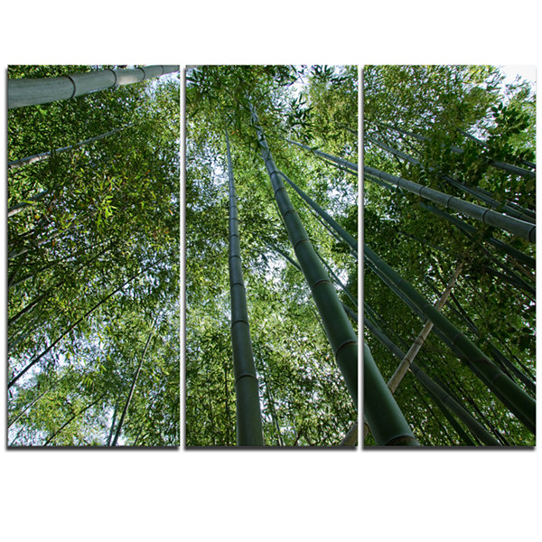 Designart Bamboo Forest Seen From Ground Forest Triptych Canvas Wall Art Print