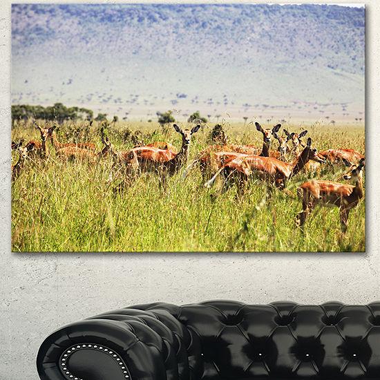 Designart Beautiful Antelope In Grass African Landscape Canvas Art Print
