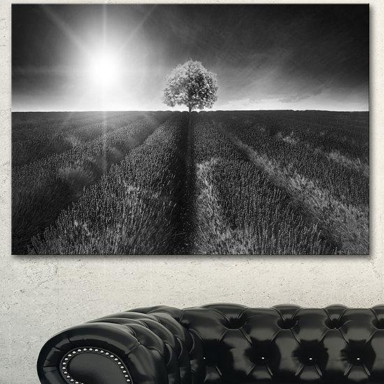 Designart Beautiful Black White Lavender Field Extra Large Landscape Canvas Art