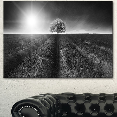 Designart Beautiful Black White Lavender Field Extra Large Landscape Canvas Art, One Size , White