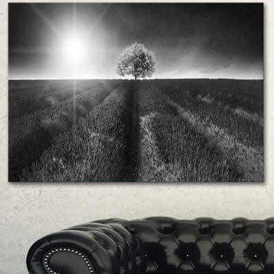 Designart Beautiful Black White Lavender Field Extra Large Landscape Canvas Art