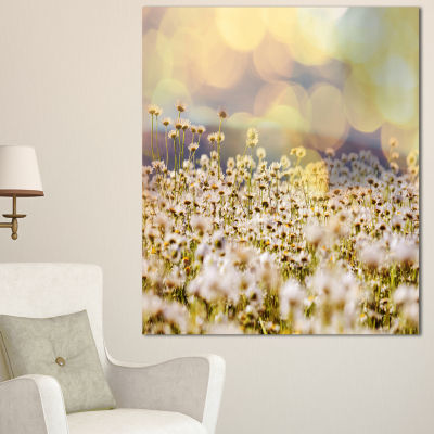 Designart Beautiful Chamomiles Field Oversized Landscape Canvas Art