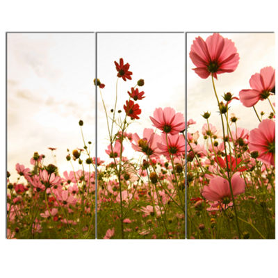 Designart Beautiful Cosmos Flowers Garden Floral Canvas Art Print - 3 Panels
