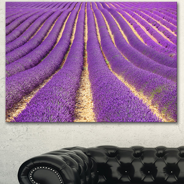 Designart Beautiful Pattern Of Blooming LavenderLarge Flower Canvas Wall Art - 3 Panels