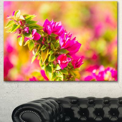 Designart Beautiful Pink Bougainvillea Flowers Floral Canvas Art Print