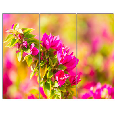 Designart Beautiful Pink Bougainvillea Flowers Floral Canvas Art Print - 3 Panels