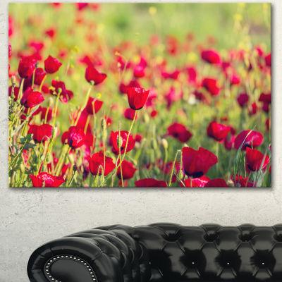Designart Beautiful Poppy Flowers Background LargeFlower Canvas Art Print - 3 Panels