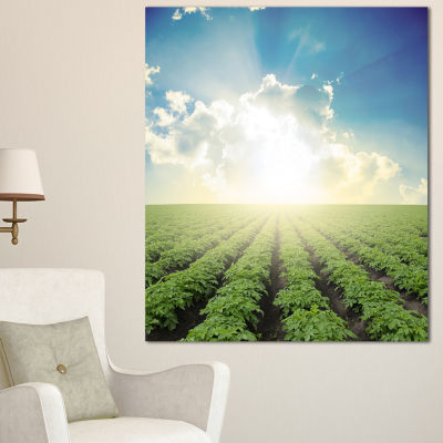 Designart Beautiful Potato Field At Sunset Extra Large Landscape Canvas Art