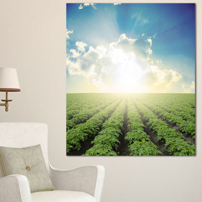 Designart Beautiful Potato Field At Sunset Extra Large Landscape Canvas Art - 3 Panels