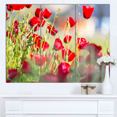 Designart Beautiful Red Poppy Flowers View FloralCanvas Art Print - 3 Panels