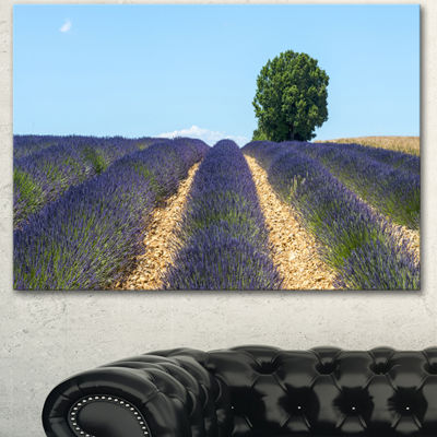 Designart Beautiful Rows Of Lavender In France Landscape Canvas Wall Art