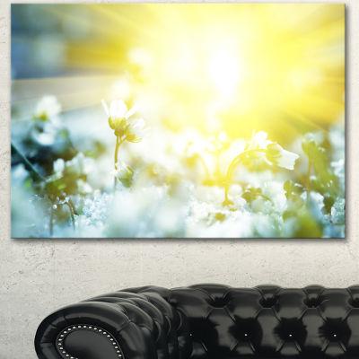 Designart Beautiful White Flowers At Sunrise LargeFlower Canvas Wall Art