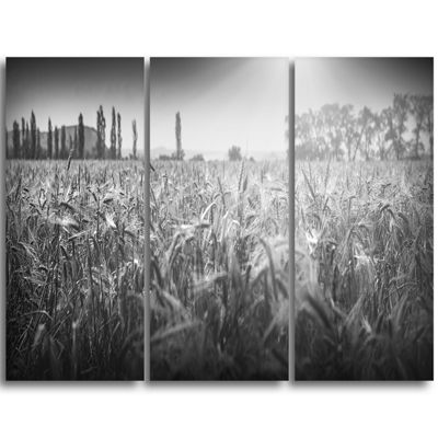 Designart Black And White Wheat Field Landscape Triptych Canvas Art Print