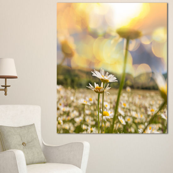 Designart Blooming Chamomiles Flowers Oversized Landscape Canvas Art