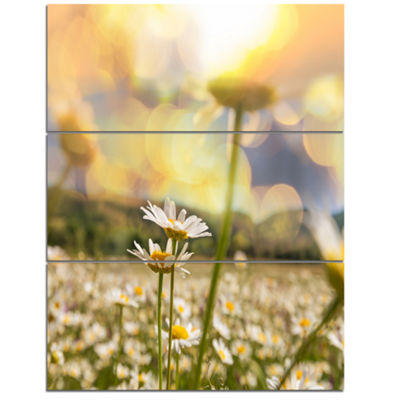 Designart Blooming Chamomiles Flowers Oversized Landscape Canvas Art - 3 Panels