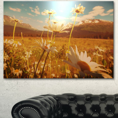 Designart Blooming Chamomiles In Meadow Large Flower Canvas Wall Art