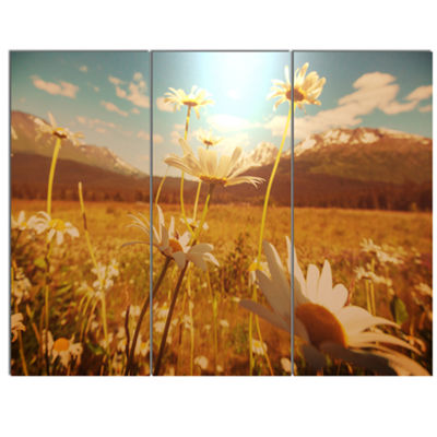 Designart Blooming Chamomiles In Meadow Large Flower Canvas Wall Art - 3 Panels