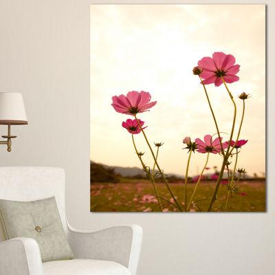 Designart Blooming Cosmos Flower Field Floral Canvas Art Print