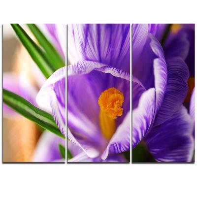 Designart Blooming Crocus Flower Large Floral WallArt Triptych Canvas