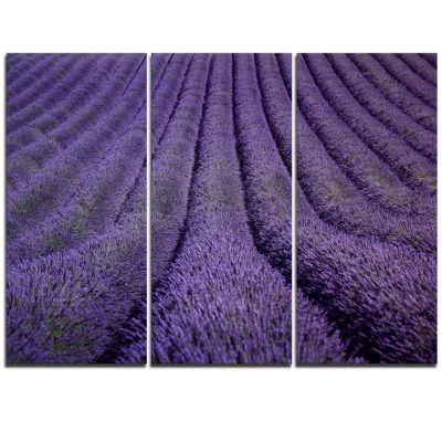 Designart Blooming Lavender Flower Texture Landscape Triptych Canvas Art Print