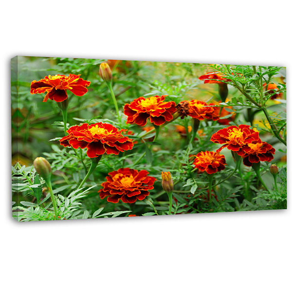 Designart Blooming Red Marigold Flowers Floral Canvas Art Print