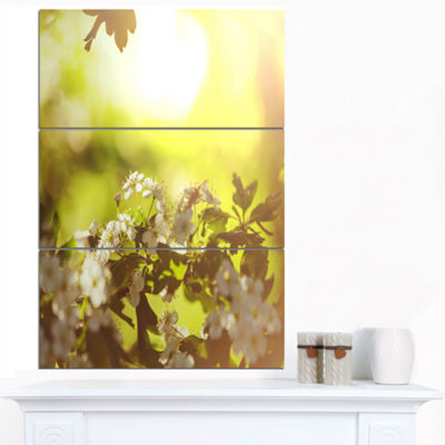 Designart Blossom Cherry On Green Background Floral Canvas Art Print - 3 Panels