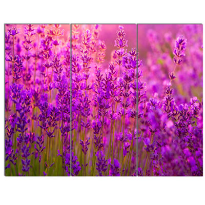Designart Bright Purple Lavender Field Tihany Floral Canvas Art Print - 3 Panels