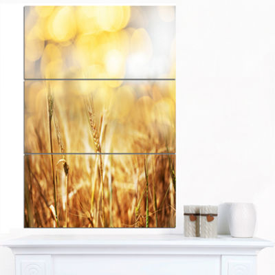 Designart Brown Wheat Plants In Field Floral Canvas Art Print - 3 Panels