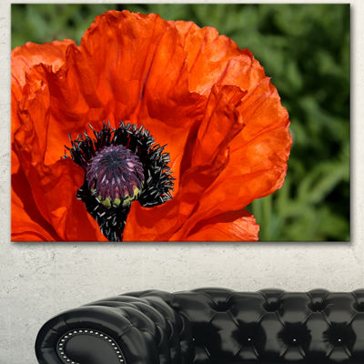 Designart Close Up View Of Red Poppy Flower FloralCanvas Art Print - 3 Panels