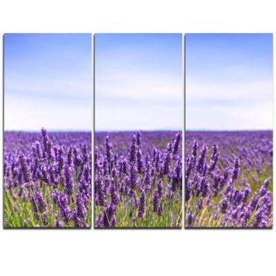 Designart Close View Of Lavender Flower Field Oversized Landscape Wall Art Print