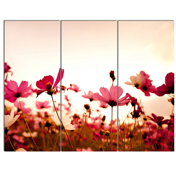 Designart Cosmos Flowers On Pink Background FloralCanvas Art Print - 3 Panels